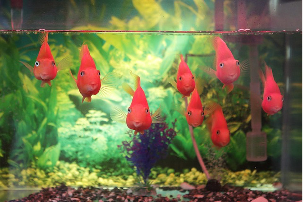 image - How to Set Up Your Own Tank Aquarium