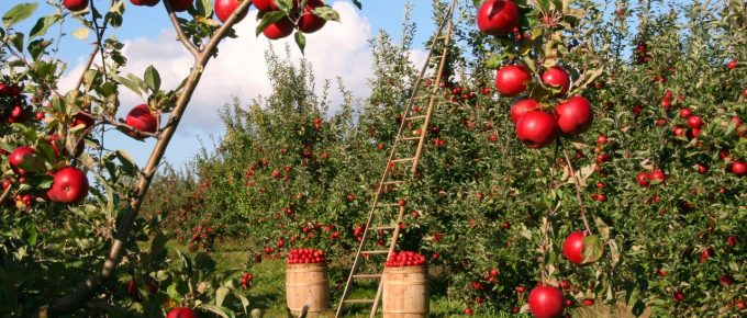 Planning Your Garden: 7 Things You Need to Keep in Mind