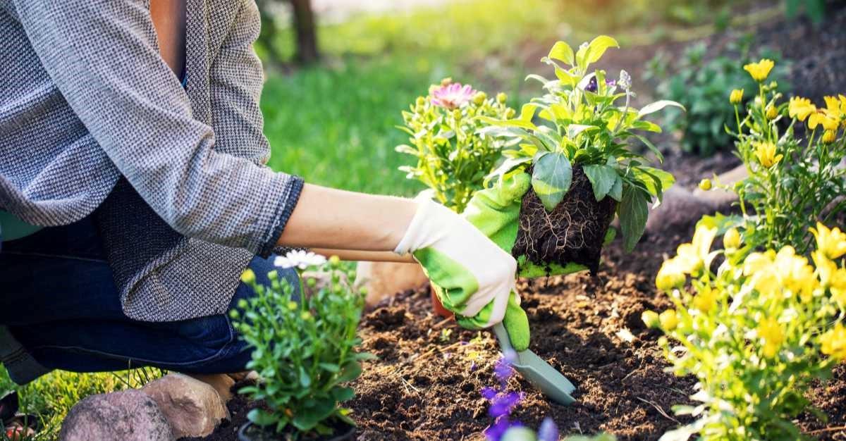 image - Gardening