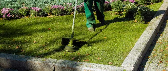 How to Choose the Perfect Weed Eater?