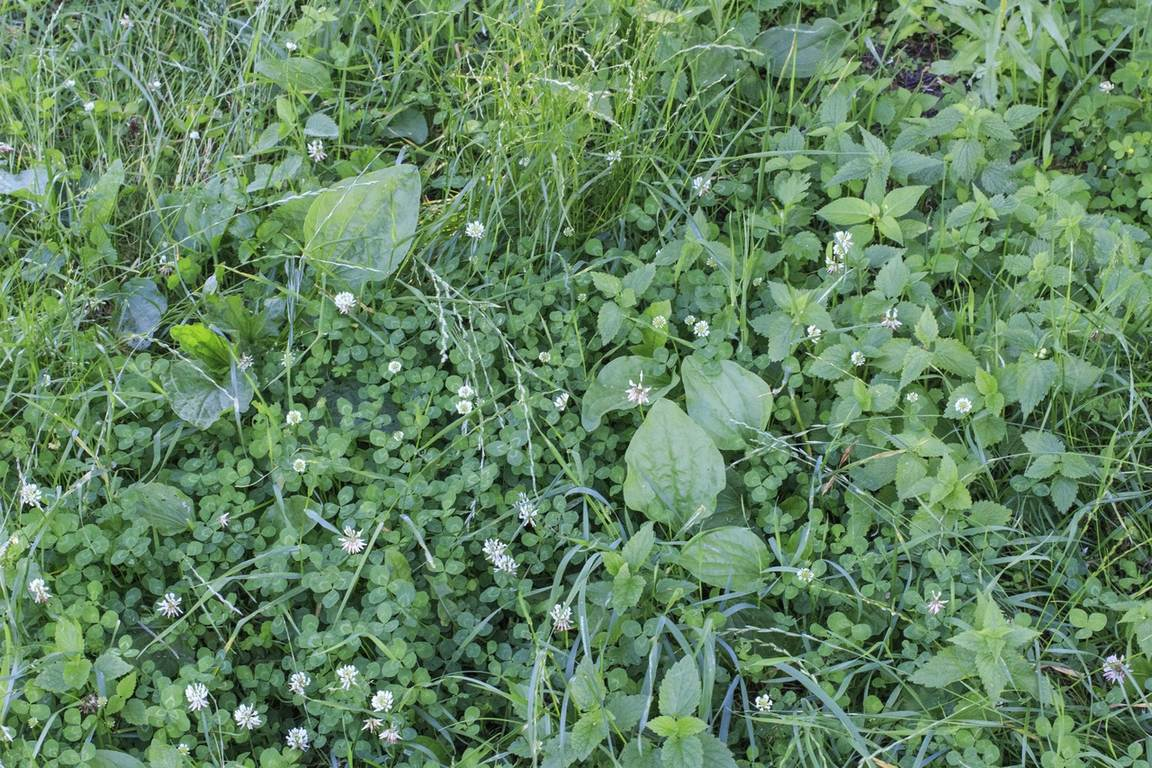 image - Unleashing Tips and Tricks to Get Rid of Lawn Weeds