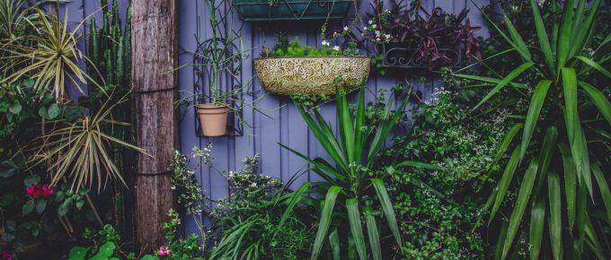 Maintaining Your Garden to Survive the Australian Summer
