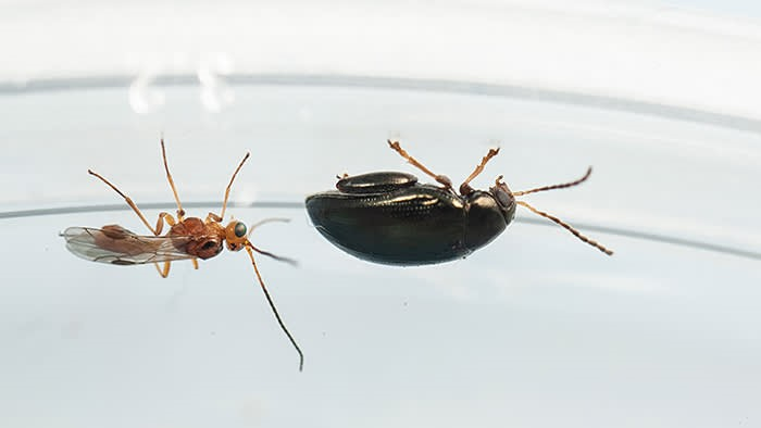 image - Reasons to Rid Your Home of Pests