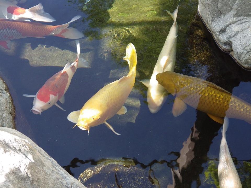 image - Fish