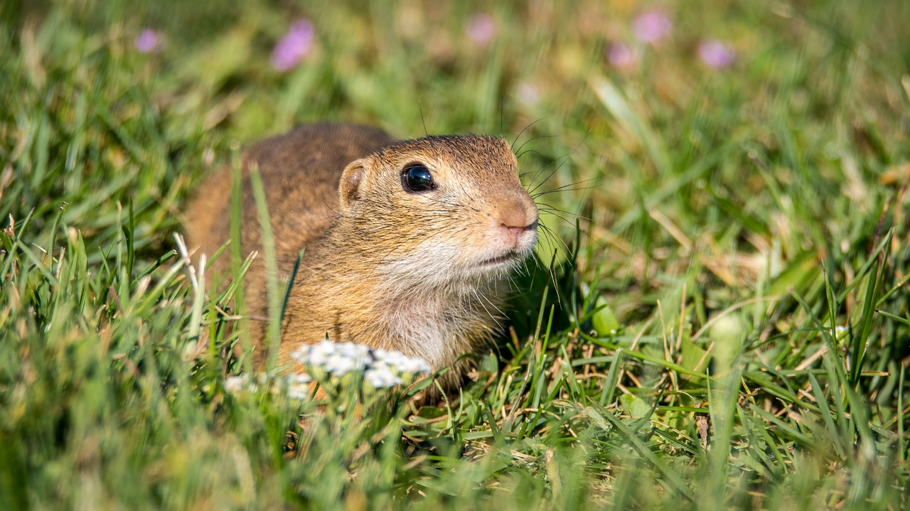 Featured image - 7 Home Remedies for Getting Rid of Gophers in Your Yard