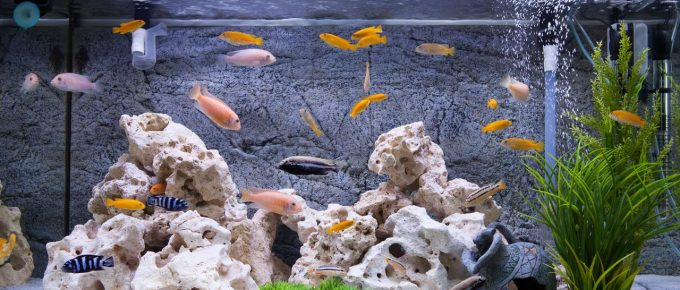 5 Easy Tips to Setup an Aquarium