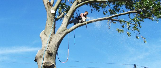 How to Cut Tree Limbs Over the House – Easy and Safe Way