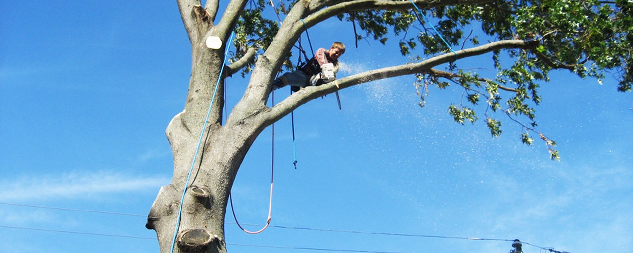 image - How to Cut Tree Limbs Over the House - Easy and Safe Way