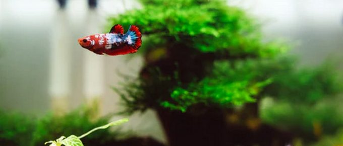 What Homeowners Should Know About an Aquarium Before Getting One