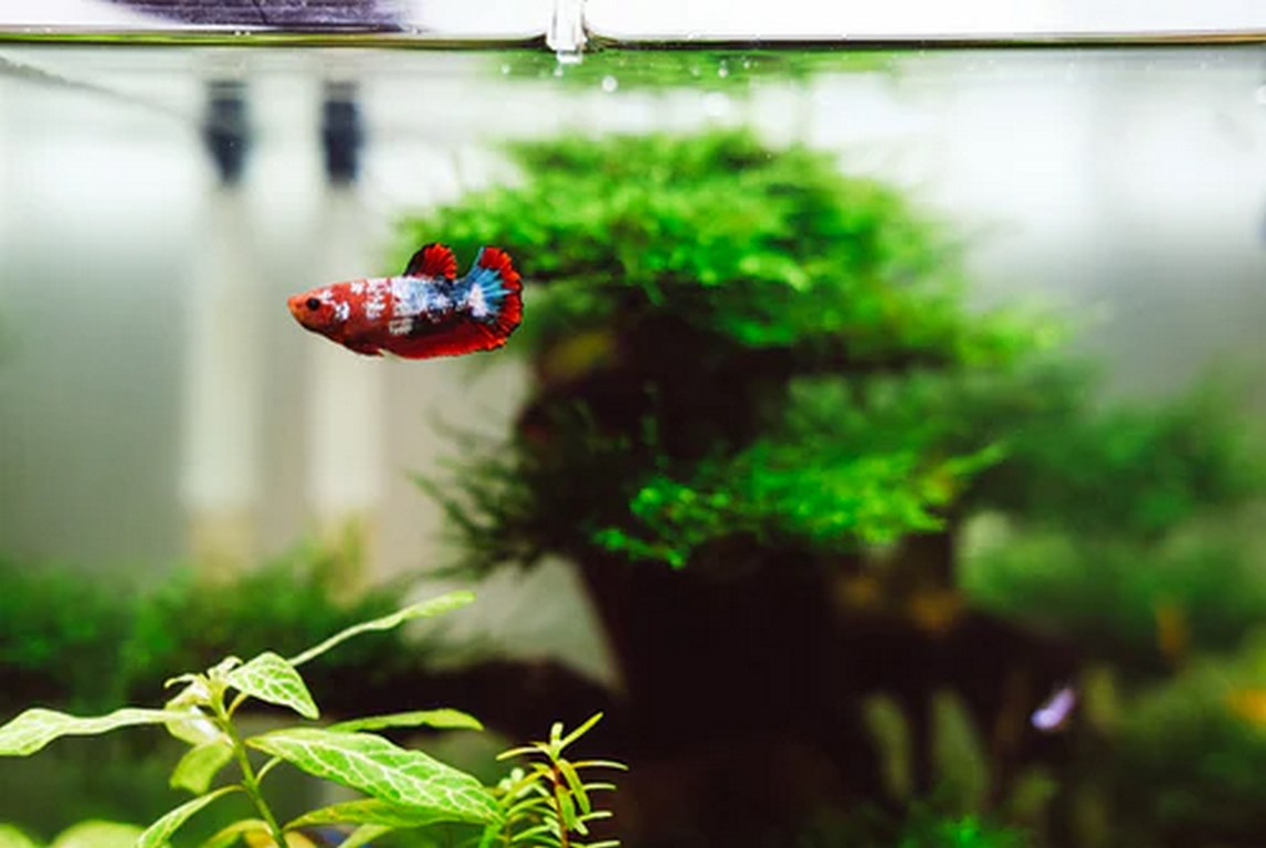 image - What Homeowners Should Know About an Aquarium Before Getting One