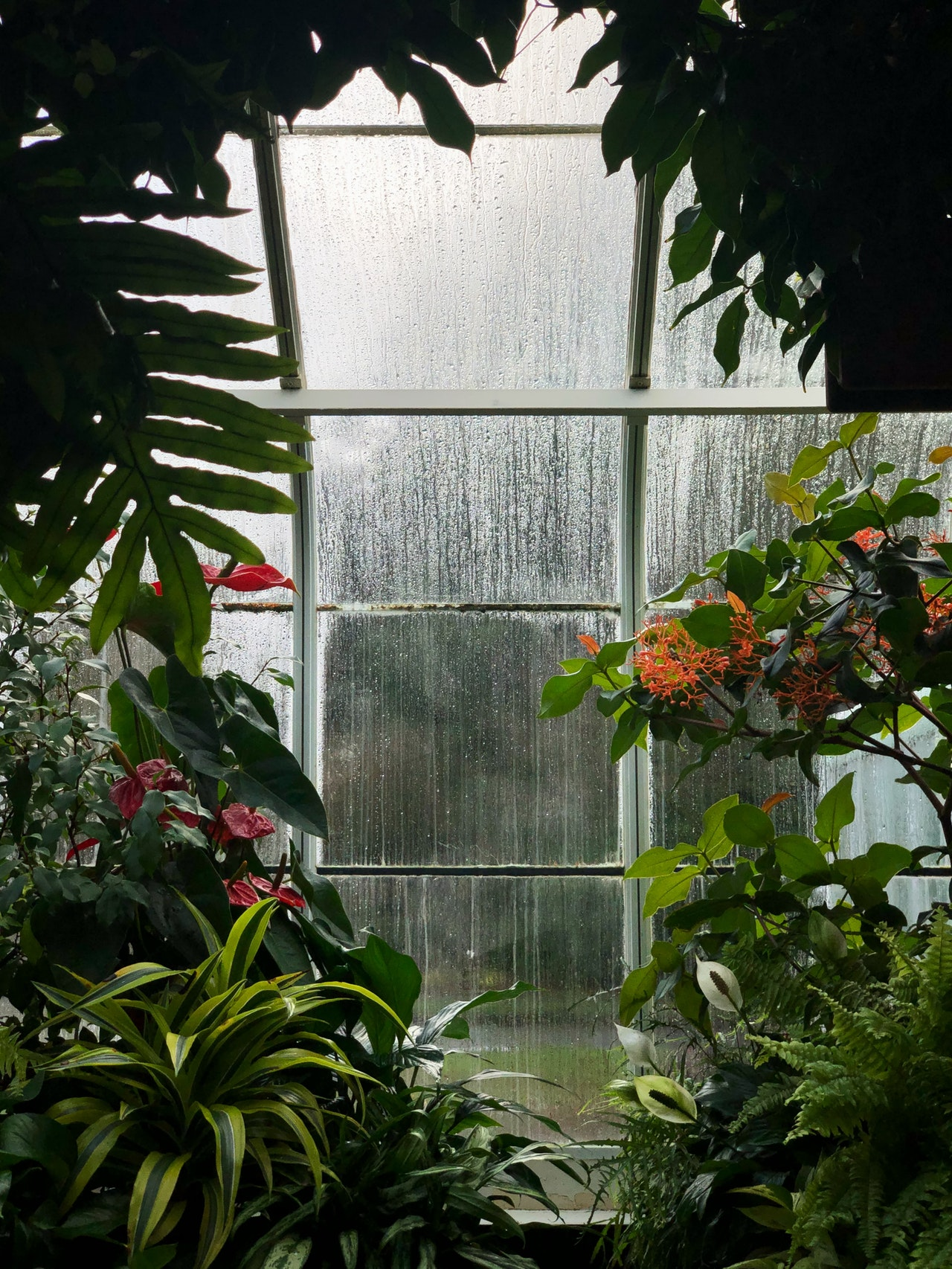 image - What You Should Know Before Setting Up A Greenhouse At Home