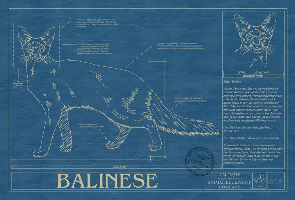 image - balinese
