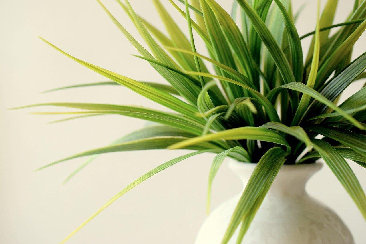 image - Indoor Plants