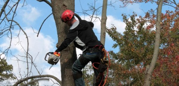 Four Pressing Reasons to Remove a Tree from Your Property