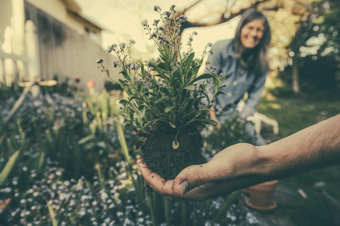 image - How Safe Is It to Use Weed Killers for Your Garden