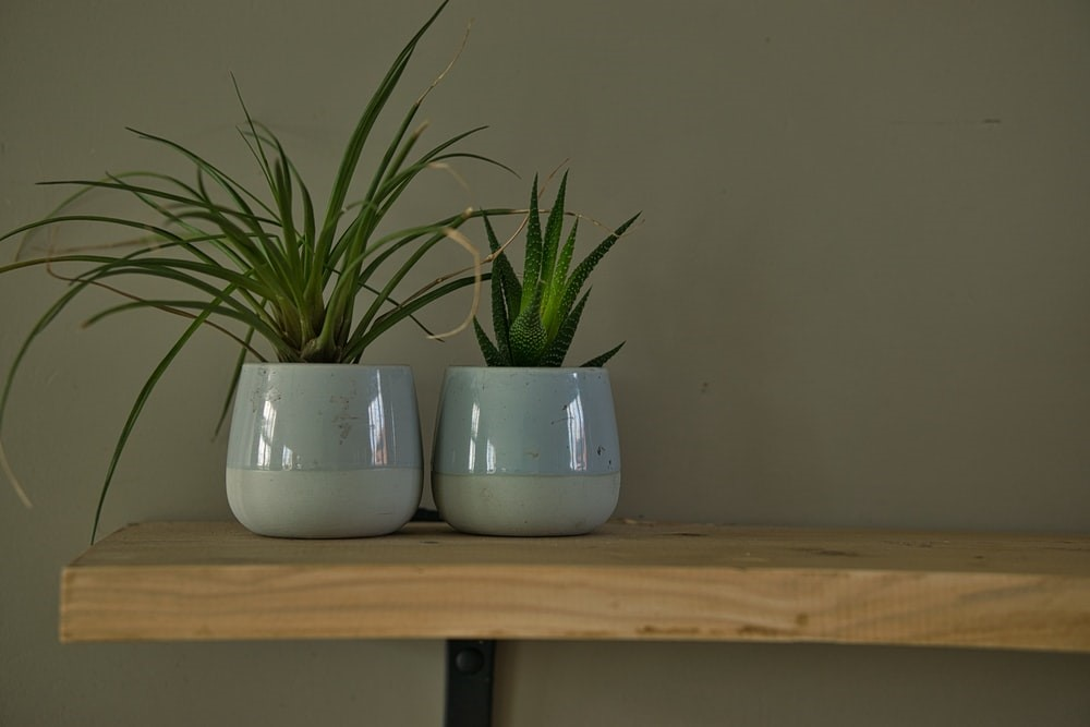 image - How to Buy Pots and Planters for Your Home?