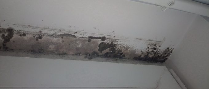 Is Bleach or Vinegar Better to Kill Mold?