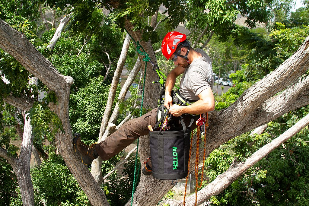 image - The Dangers of Tree Work 4 Questions You Should Ask Before Hiring an Arborist
