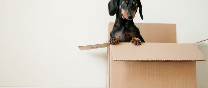 Useful Tips for Hiring Professional Movers