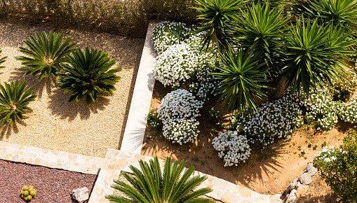 Why should you choose a Drought Tolerant Landscape Design?