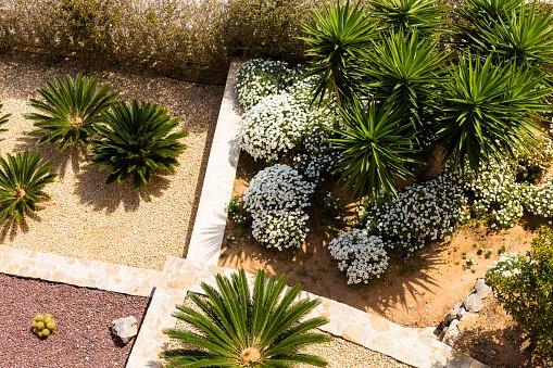 image - Why should you choose a Drought Tolerant Landscape Design?