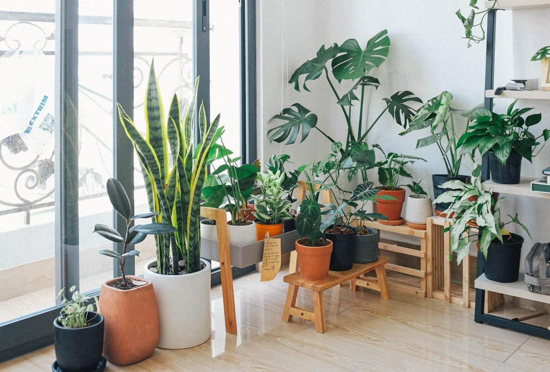 image - Add Potted Plants