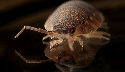 5 Easy Ways to Get Rid of Bed Bugs