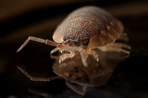 image - 5 Easy Ways to Get Rid of Bed Bugs