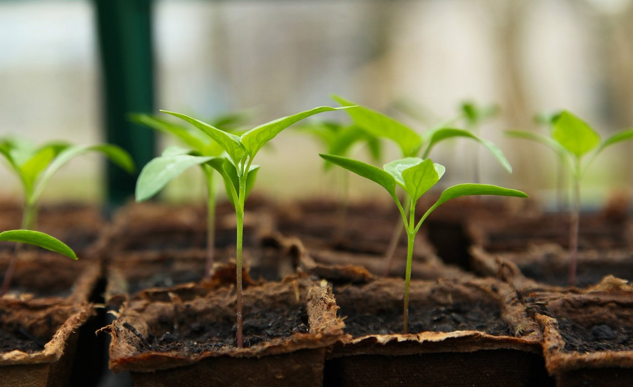 image - Plant Your Seeds
