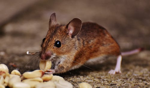 image - Your Guide to Commercial Pest Control