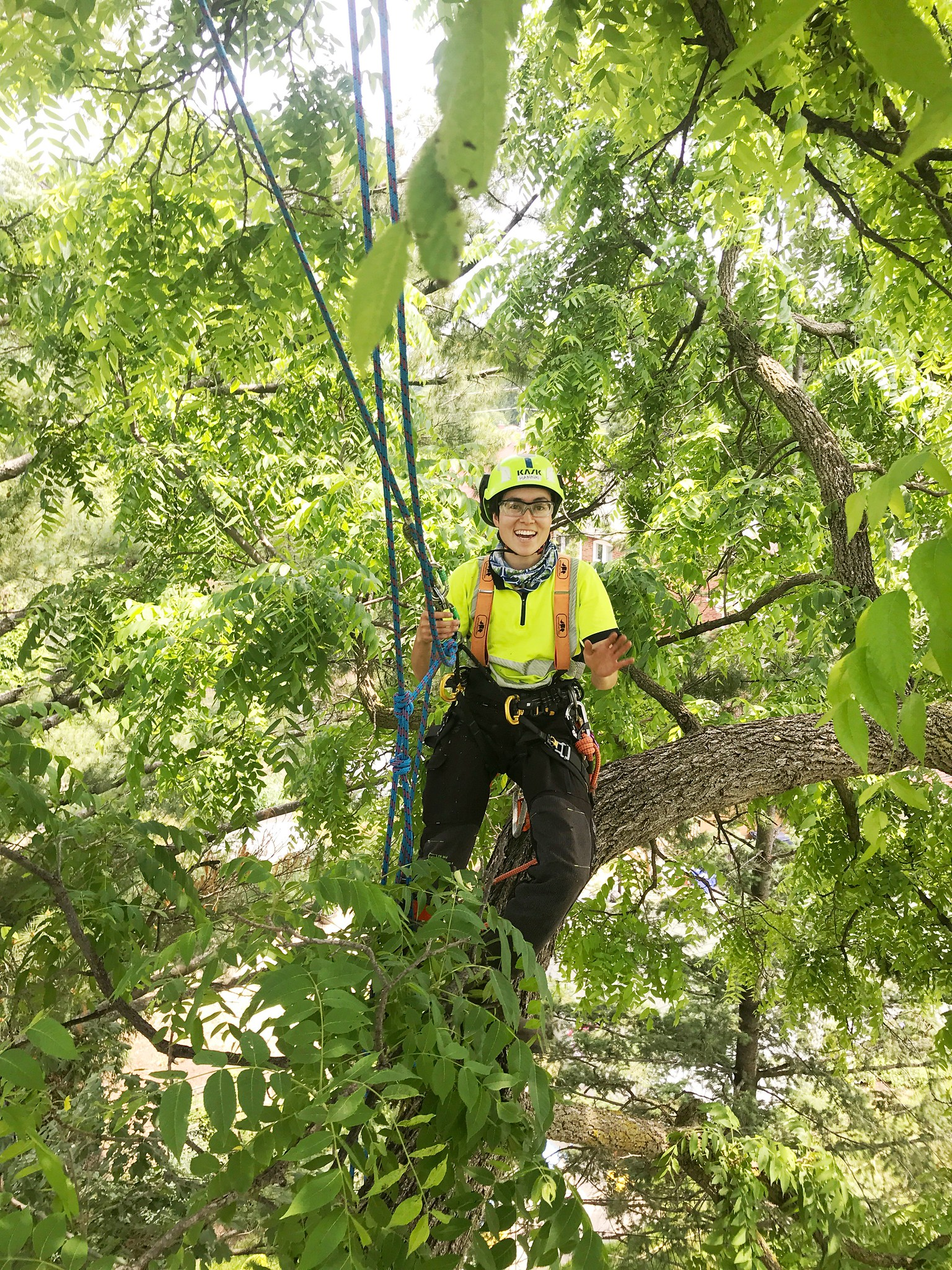 image - 6 Benefits of Professional Tree Care Services