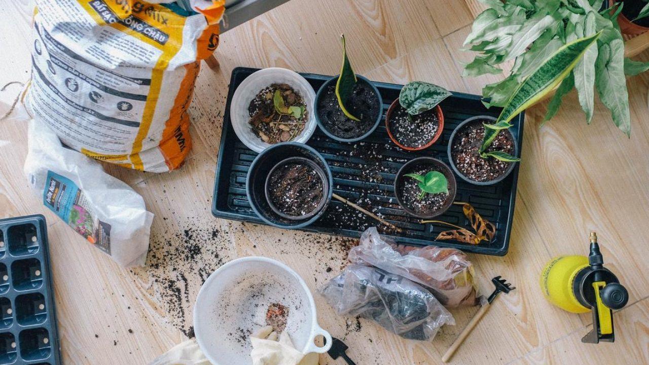 6 Ways to Improve Your Gardening Skills