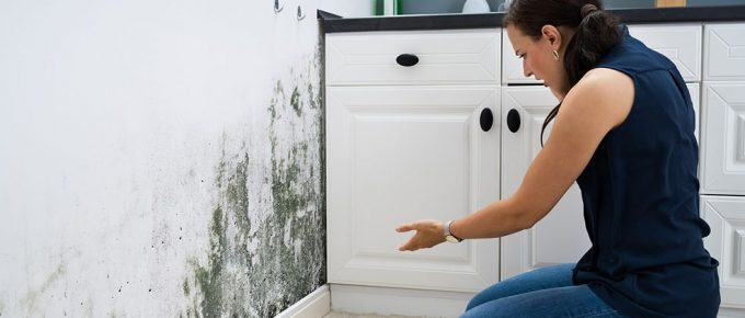 A Mini-Guide on Filing a Mold Damage Insurance Claim for Your Home