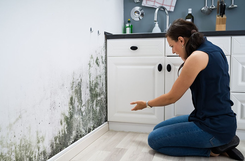 image -  A Mini-Guide on Filing a Mold Damage Insurance Claim for Your Home