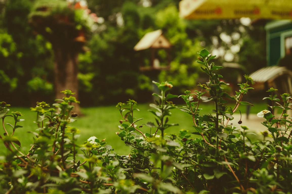 image - How to Go Green with These Eco-Friendly Garden Gadgets