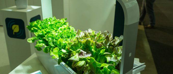 How to start Your Own Indoor Garden