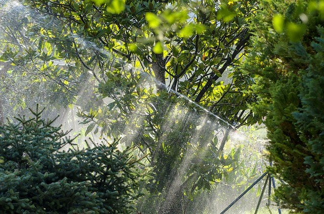 image - Maintaining a Lawn and Garden in AU with Online Irrigation Supplies