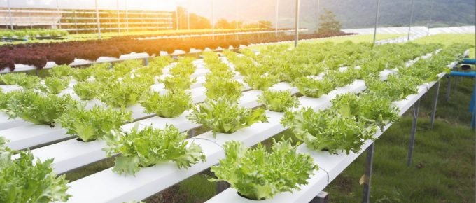How to Clean a Hydroponic System?