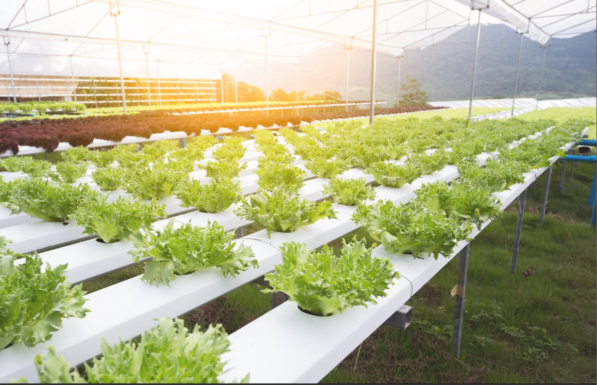 image - How to Clean a Hydroponic System