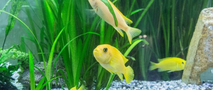 Aquarium at Home: 5 Handy Tips to Maintain Fish in the Aquarium
