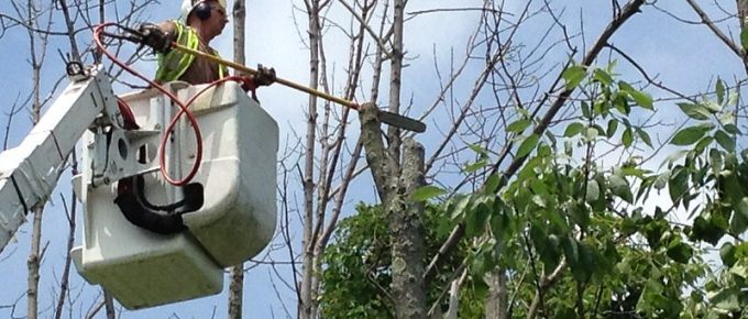 From Tree Trimming to Fertilizing: How to Care for the Health of Your Trees