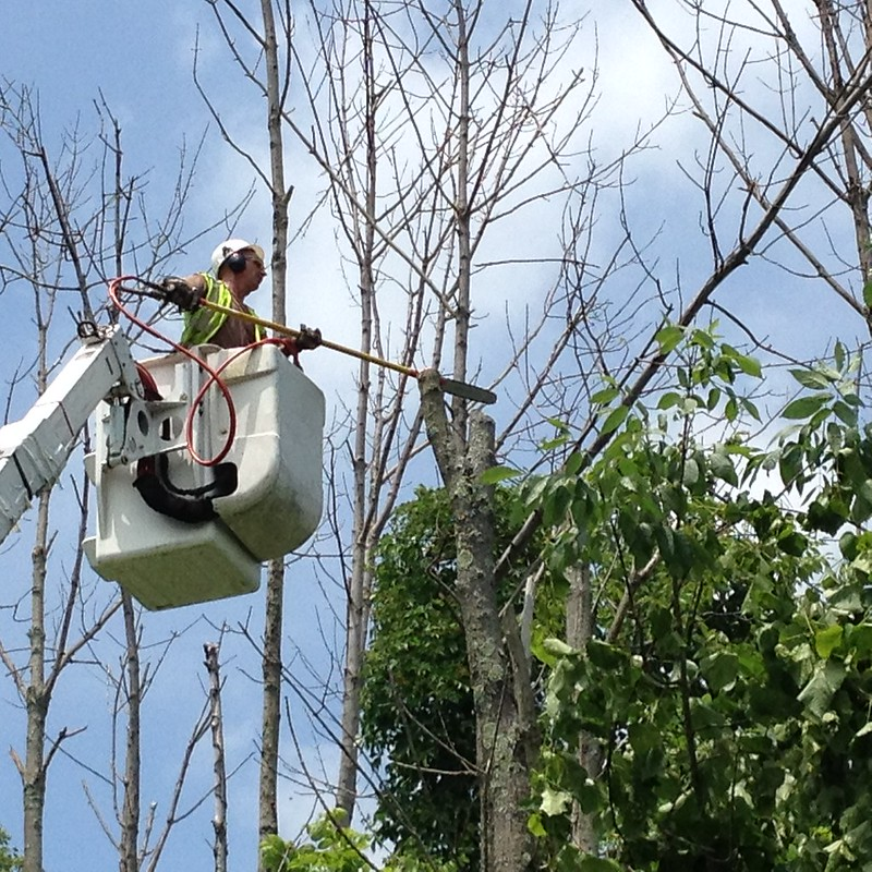 image - From Tree Trimming to Fertilizing How to Care for the Health of Your Trees