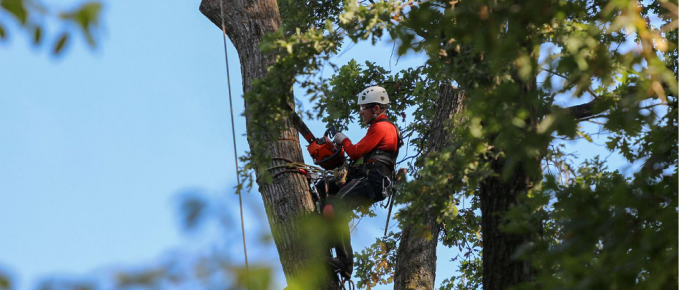 5 Reasons You Should Hire an Arborist for Tree Removal or Trimming