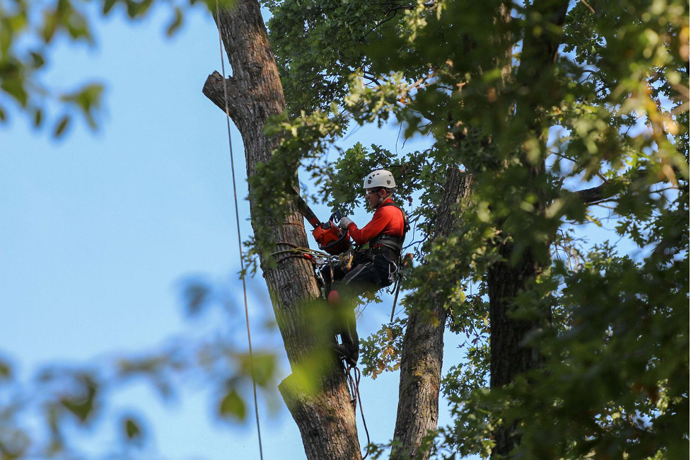 image - 5 Reasons You Should Hire an Arborist for Tree Removal or Trimming
