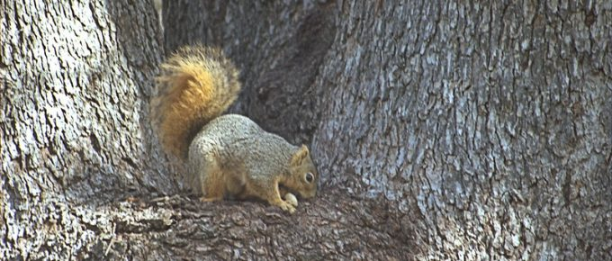 Top 10 Best Squirrel Removal in Denver