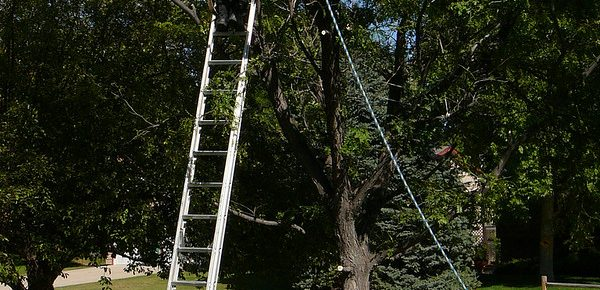 Top 10 Best Tree Removal Services