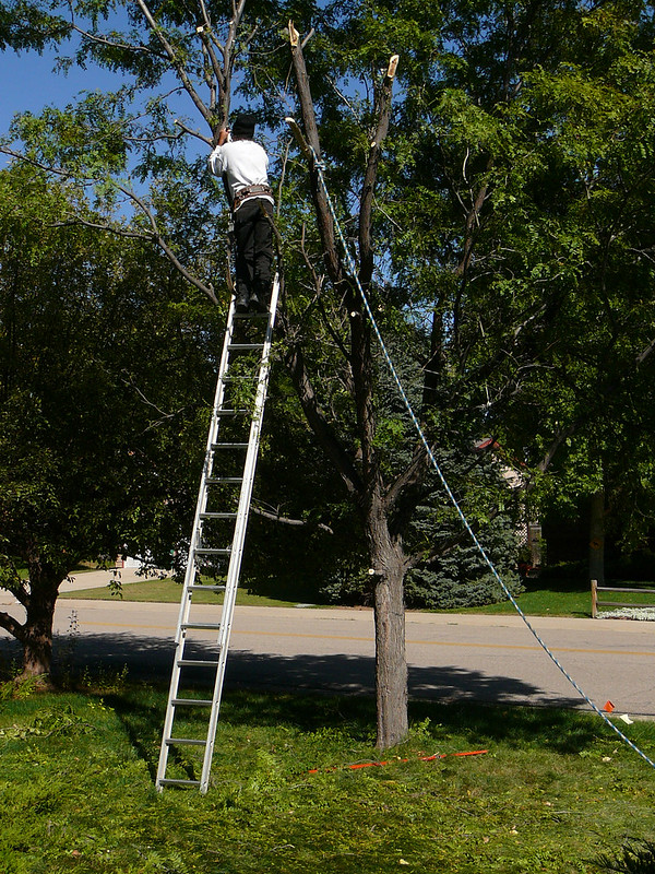 image - Top 10 Best Tree Removal Services