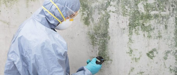 4 Tips for Finding Pros to Deal with Your Mold Problems in Los Angeles