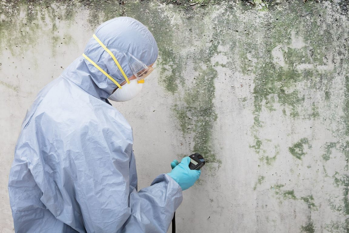 image - 4 Tips for Finding Pros to Deal with Your Mold Problems in Los Angeles
