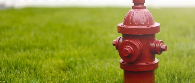 6 Ways to Protect Your Lawn This Summer